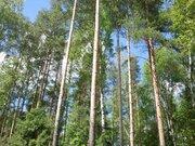 Лесной участок 13 соток в пос. Самар-1, Раменский район 40 км от МКАД - Фото 4