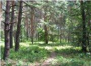 Участок 20 соток с лесными деревьями в Кратово