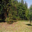 Лесной земельный участок - Фото 1
