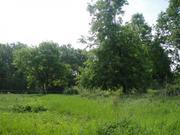 Шикарный прилесной участок 50 соток в тихой жилой деревне. ПМЖ. - Фото 2
