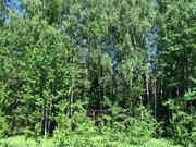 Земельный участок 13,15 сот. в кп Лисичкин лес - Фото 5