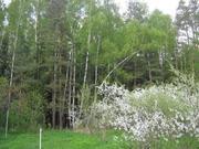 Участок 41 сотка в поселке Победа, Мытищинского района - Фото 2
