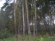 Лесной уч-к 40 сот. в п.Ильинский, вековые сосны, ПМЖ, ИЖС, асфальт, л - Фото 1