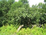 Продаётся дом с землей 45сот, Продажа домов и коттеджей Мцара, Абхазия, ID объекта - 502998926 - Фото 8