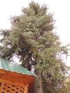 Продам загородный коттедж - дачу, расположенный в СНТ Лесовод, - Фото 5