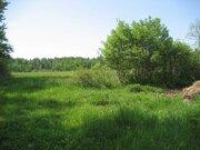 Земельный участок для лпх 50 соток в д. Кошелево - Фото 4