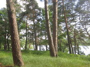 Живописный лесной земельный участок на 1-ой линии реки Ока, д. Лужки - Фото 3