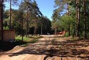 Участок 40 сот, в Сосновом лесу, на участке сосны, газ, р.Волга 700 м - Фото 3