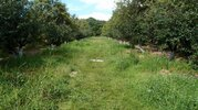 Земельный участок 20га с садом - Фото 1