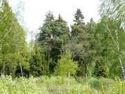 Участок, Киевское ш, 60 км от МКАД, Любаново. Лесной участок 5 . - Фото 1
