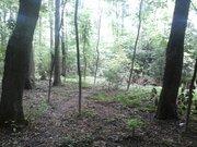 Участок в лесу - Фото 1