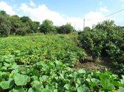 Продается земельный участок в п. Редькино Озерского района - Фото 2