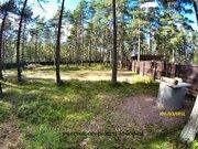 21 сотка соснового леса в 500 метрах от Финского залива. - Фото 3