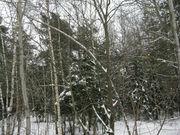 Район деревни Сальково СНТ «Поречье» Лесной участок 24.2 сотки. - Фото 5