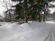 Лесной участок в д. Садки - Фото 3