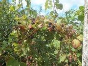 16 соток с собственным прудом в деревне Бобры Можайского района - Фото 5