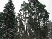 Барвиха ДПК Новь 20 соток - Фото 1