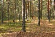Участок 48 га, на первой линии р.Волга, с Сосновым лесом - Фото 2