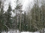 Район деревни Сальково СНТ «Поречье» Лесной участок 24.2 сотки. - Фото 1