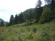 Элитный изолированный участок по р.Чемал - Фото 3