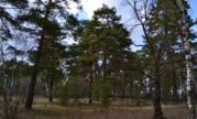 Лесной земельный участок на высоком берегу реки Ока деревня Лужки - Фото 5