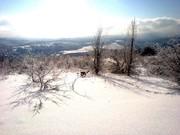 Лесных угодий в предгорьях Северского района - Фото 4