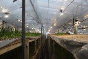 Тепличный комплекс для выращивания цветов и др.культуры - Фото 2