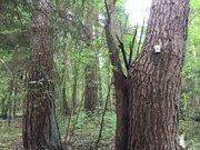 Лесной массив 27 Га с вековыми елями, соснами и березами в деревне - Фото 1