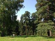 Участок 20 соток с соснами в Чеховском р-не, ИЖС. - Фото 1