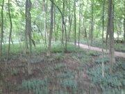 Участок в лесу - Фото 2