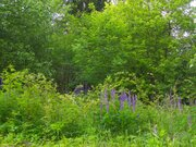 Лесной участок под ИЖС - Фото 3