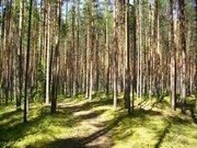 Участок 48 га, на первой линии р.Волга, с Сосновым лесом - Фото 3