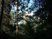 Барвиха ДПК Новь лесной участок 12 соток - Фото 2