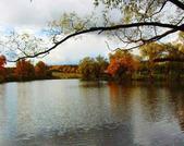 Участок 20 соток на берегу озера, Рузский р-н. - Фото 4