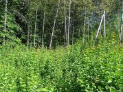Живописный участок в Шарапово 12 соток - Фото 5