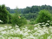 В Волоколамском районе 72 гектара - Фото 4