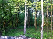 Участок 8 сот в Чеховском районе , с. Талеж, с лесными деревьями. - Фото 2