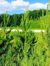 Лучший земельный участок в экологически чистом районе - Фото 4