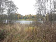 Участок 160 соток, с соснами на 1 береговой линии р.Волга, д. Терехово - Фото 4