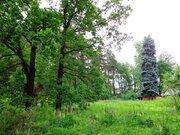 Участок в Осеченках 30 соток - Фото 2