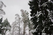 Лесной участок 20 соток в пжкиз Назарьево