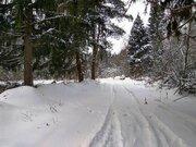 Лесной участок в д. Садки - Фото 5