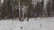 Новое ДНТ Кристал - лес, природа, тишина. - Фото 4