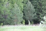 Прилесной земельный участок в д. Терехунь, Московская область - Фото 5