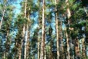 Продам зем.участок в Кротово(Приозерский р-н) - Фото 2