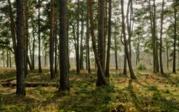 Земельный участок в п.Чернолучье - Фото 3