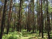 Лесной участок 10 соток д.Копнино ИЖС - Фото 2