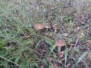Участок 8,5 соток. Ока, лес, грибы и ягоды.Транспортная доступность - Фото 2