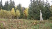 Продаётся лесной участок 44 сотки Солнечногорский район д.Николаевка - Фото 1