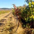 Виноградники, плодовые сады, сельхоз земля в Севастополе - Фото 2
